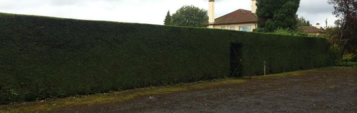 Tree, hedge & shrub maintenance